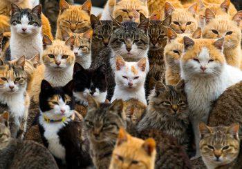 Aoshima : le royaume des chats est une île du Japon