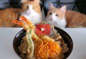 Jun's Kitchen : Recette des Tempura Udon Noodles