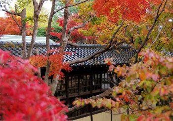 Japon : Découvrez le temple d'Hondo-ji de Chiba avec TokyoStreetView