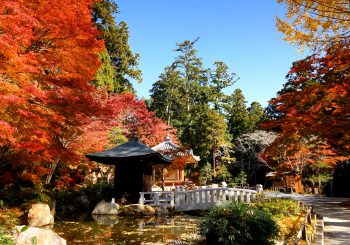Visitez le temple Hattasan Soneiji avec TokyoStreetView